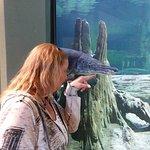 Foto di National Mississippi River Museum & Aquarium