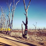 Photo de Winton Wetlands