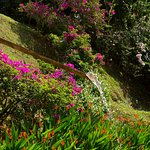 Vegetación, agua de nacimiento