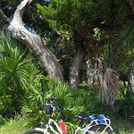 biking the island trails