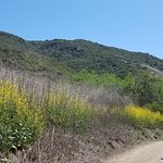 El Moro Canyon blooming in late April