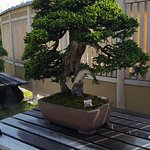 Omiya Bonsai Village照片