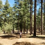 Coconino National Forest의 사진