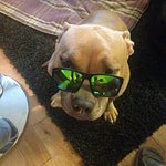 just my dog wearing cool shades...
