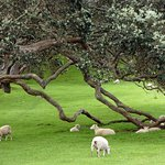 One Tree Hill (Maungakiekie) Foto