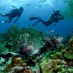 Diving in the reek at Koh BIda