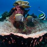 Hard sponge coral house reef