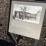 かつてのGoethe Oakの写真