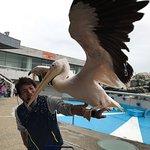 ภาพถ่ายของ Oita Marine Palace Aquarium Umitamago