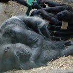 Foto de The Buffalo Zoo