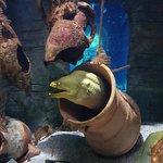 صورة فوتوغرافية لـ Aquarium Sea Life Paris Val D'Europe