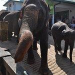 象さん移動中