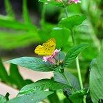 ภาพถ่ายของ Australian Butterfly Sanctuary