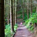 Short sleeves and summer woodland walks
