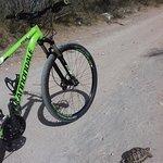 Essaouira Bike Tours照片