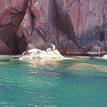 Pisces Yachts照片
