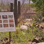 The desert garden off the gift shop offers beautiful, natural walking paths, a stream and more!