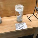 冰岛阳具博物馆照片