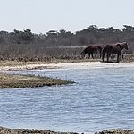 Photo de Assateague Beach