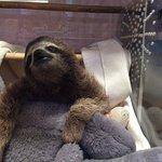 Foto de Sloth Sanctuary of Costa Rica