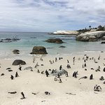 Foto de Boulders Penguin Colony