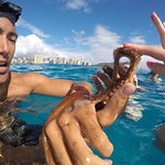 See amazing things while snorkeling