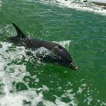 Dolphin at play!