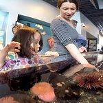 Alaska SeaLife Center resmi