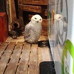 Bird Cafe, Asakusa Foto