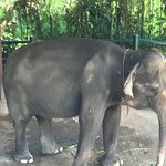 Foto de Elephant Safari Park