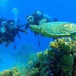 Photo of Sheikh Coast Diving Center