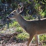 National Key Deer Refuge Foto