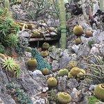 Photo de Exotic Garden (Jardin Exotique)