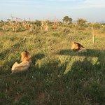 Etali Safari Lodge Photo