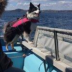 Spud! (The Captain's Dog)