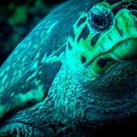 Φωτογραφία: Dive St. Kitts