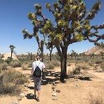 Walking through the Joshua trees.