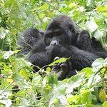 Gorillas tracking in Rushaga, Bwindi Impenetrable National Park, uganda