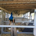 Foto de The Amish Village
