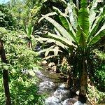 Foto Parque Nacional Barranca del Cupatitzio