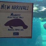 Signage regarding new manatee arrival(s)
