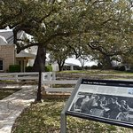 LBJ WOULD OFTEN HOLD MEETING UNDER THE TREES IN THE YARD, THE LIVE OAK IS KNOWN AS THE CABINET O