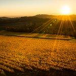 Sunset at the Willamette Valley Vineyards' Estate Vineyard