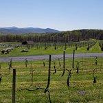 Foto de Fox Meadow Winery