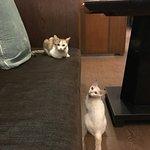 ภาพถ่ายของ เอน โวก เรสเตอรองท์ แอท อวิสตา รีสอร์ท & สปา