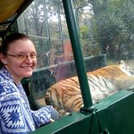 One of the tigers. You can climb into a car and stay close to them, separated by a window, of co