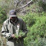 Our Ranger explaining about the unique indigenous flora - FYNBOS.