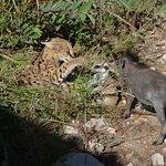 REST - Rare & Endangered Species Trust
