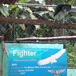 Photo de Philippine Eagle Centre