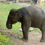 ภาพถ่ายของ ปางช้างแม่แตง